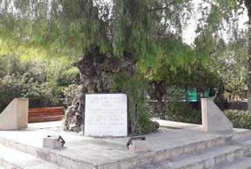 Instalarán escultura del caballo de San Martín en histórico pimiento de la Plaza de Putaendo