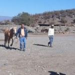 En Bellavista Carabineros encuentra caballar extraviado   desde Sahonde