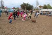 Miles de personas disfrutaron de variadas actividades  en  las fiestas patrias en Putaendo.