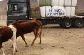 Vecino de Angol llegó con camión lleno de bolos de alfalfa para crianceros de Putaendo